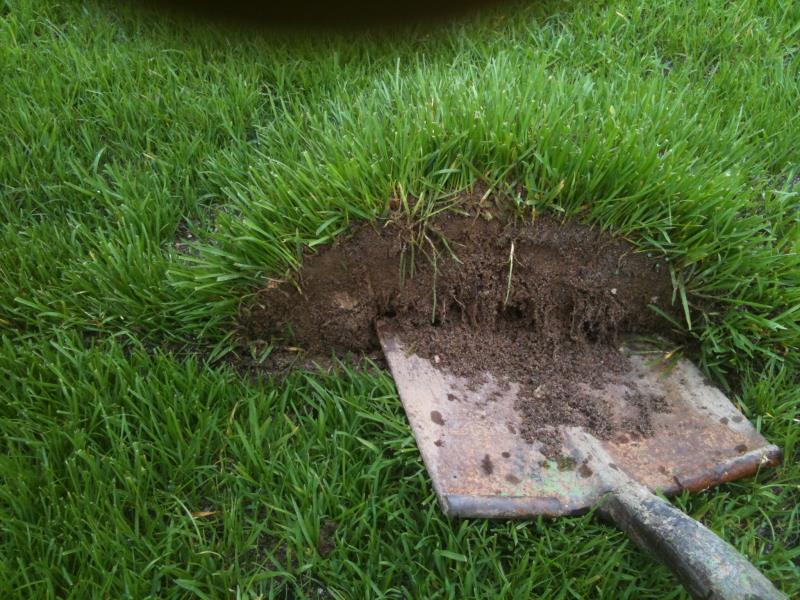 PowerGrass hybrid turfgrass system the roots grow through the backing in the porous background